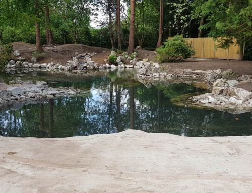 Pond construction and renovation Cheshire