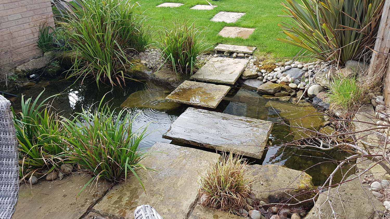 Natural Ponds
